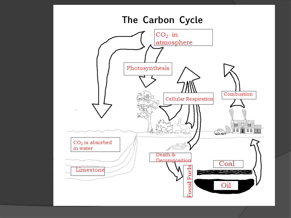 Coal Oil CO2 in atmosphere Photosynthesis Limestone Fossil Fuels