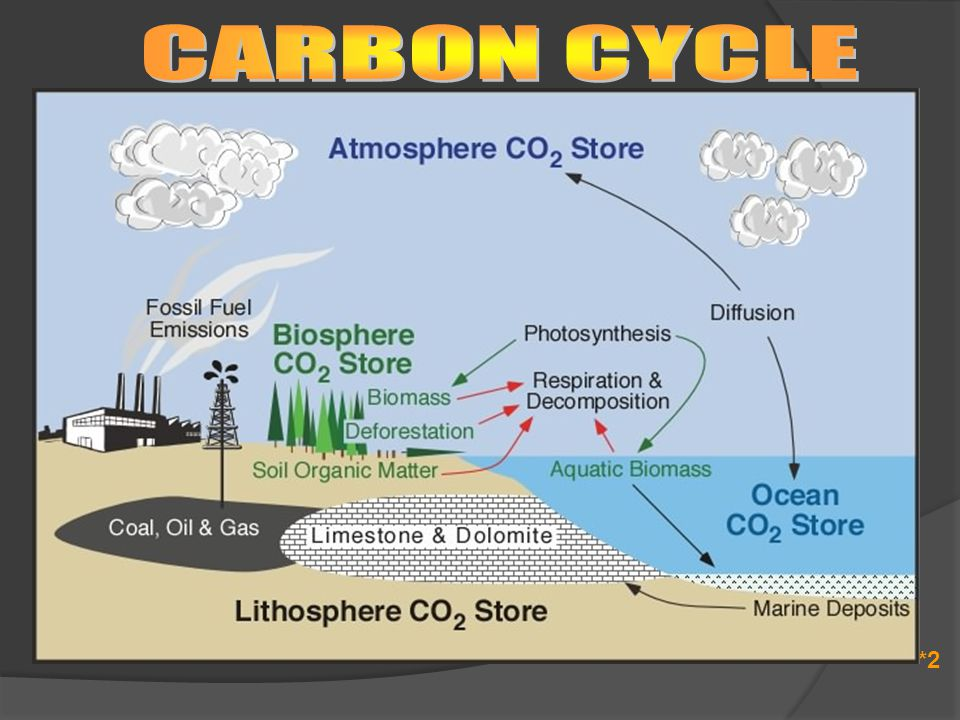 CARBON CYCLE *2