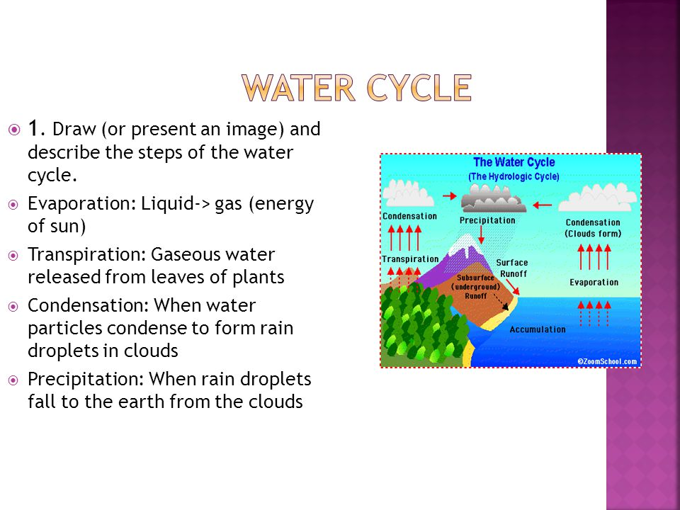 Water Cycle 1. Draw (or present an image) and describe the steps of the water cycle. Evaporation: Liquid-> gas (energy of sun)