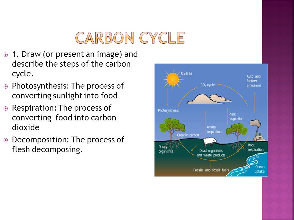 Carbon Cycle 1. Draw (or present an image) and describe the steps of the carbon cycle.