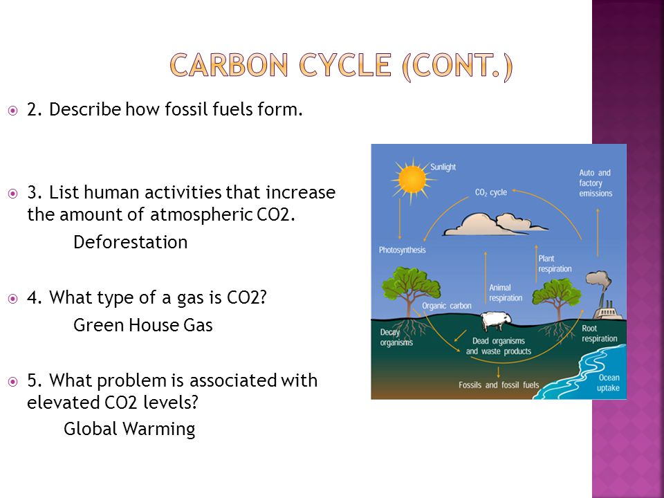 Carbon Cycle (cont.) 2. Describe how fossil fuels form.