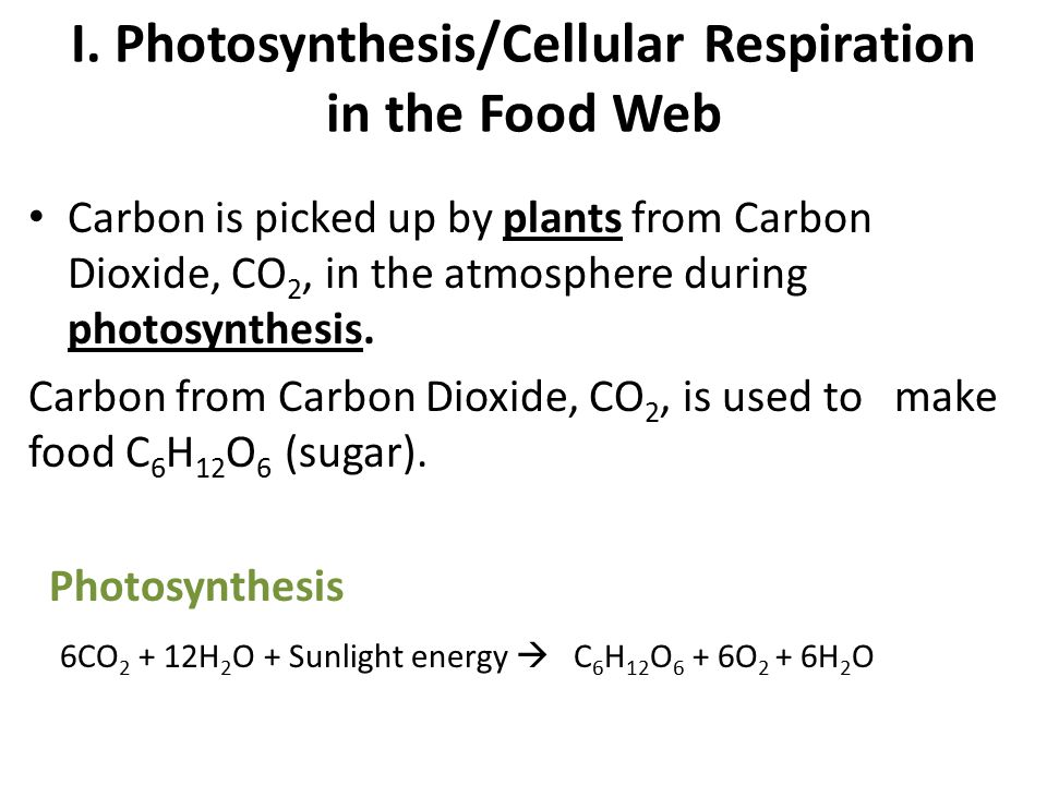 I. Photosynthesis/Cellular Respiration in the Food Web