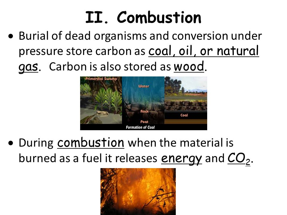 II. Combustion Burial of dead organisms and conversion under pressure store carbon as coal, oil, or natural gas. Carbon is also stored as wood.