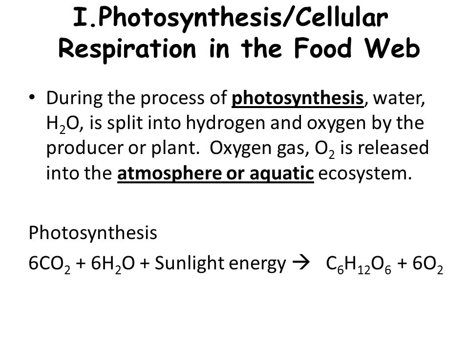 Photosynthesis/Cellular Respiration in the Food Web