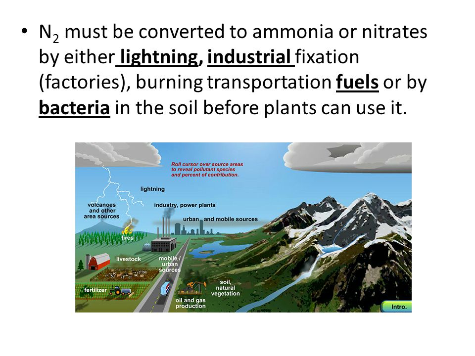 N2 must be converted to ammonia or nitrates by either lightning, industrial fixation (factories), burning transportation fuels or by bacteria in the soil before plants can use it.