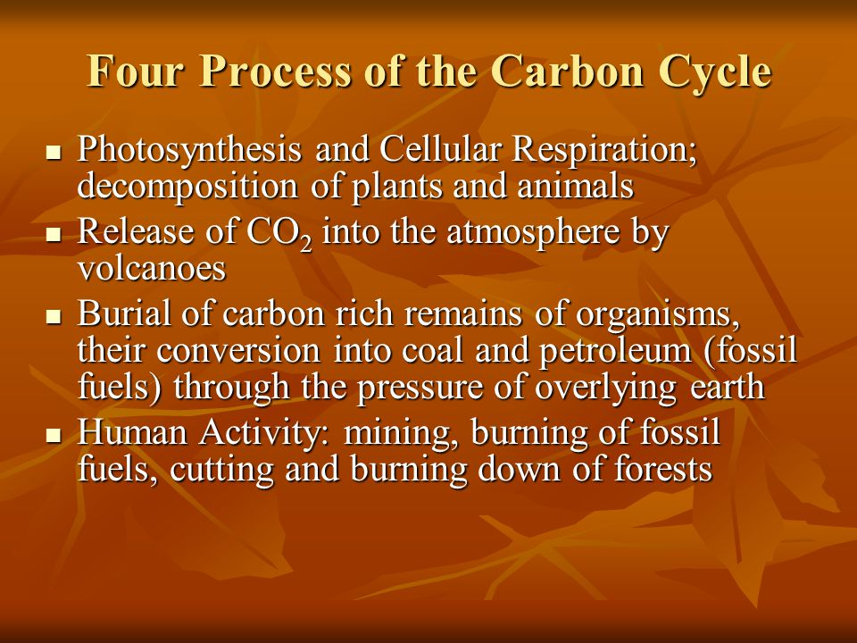 Four Process of the Carbon Cycle