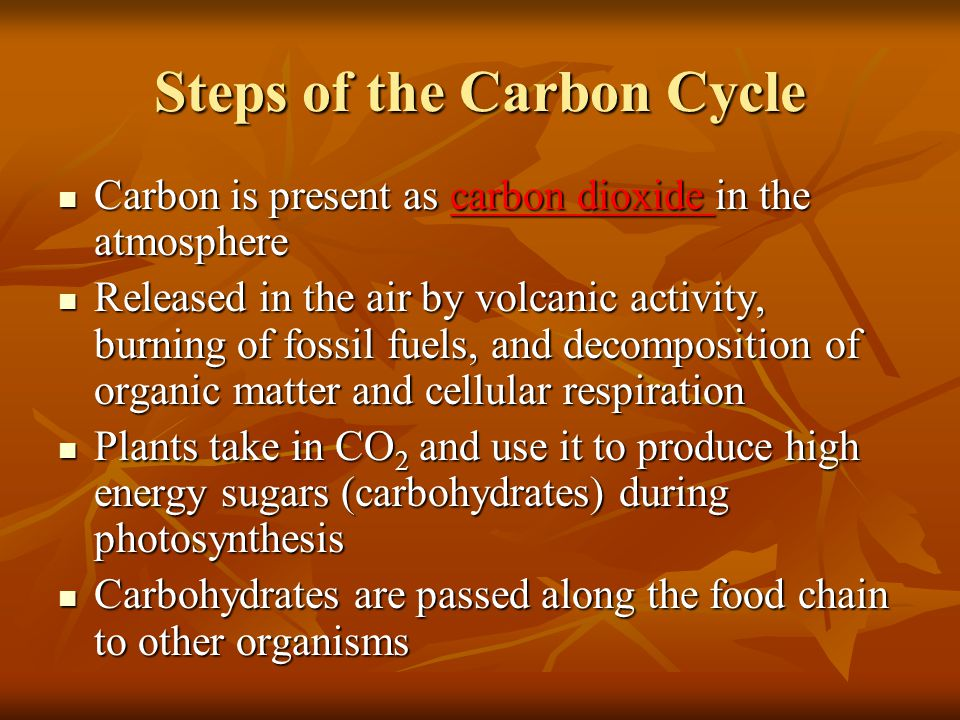 Steps of the Carbon Cycle