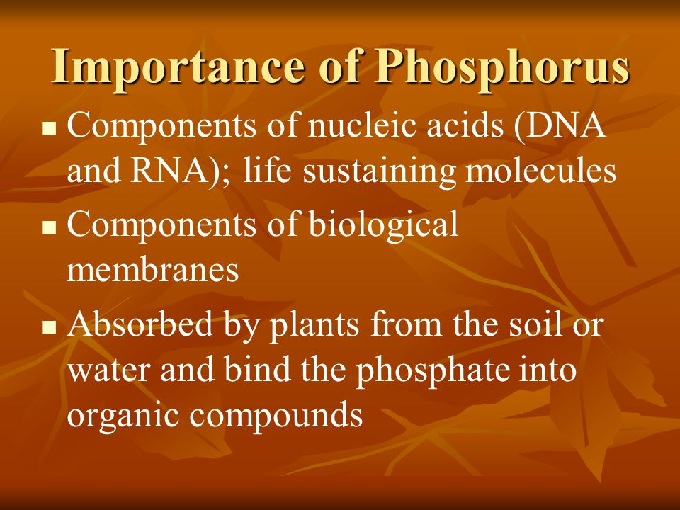 Importance of Phosphorus