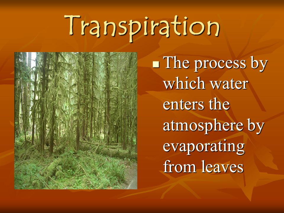 Transpiration The process by which water enters the atmosphere by evaporating from leaves