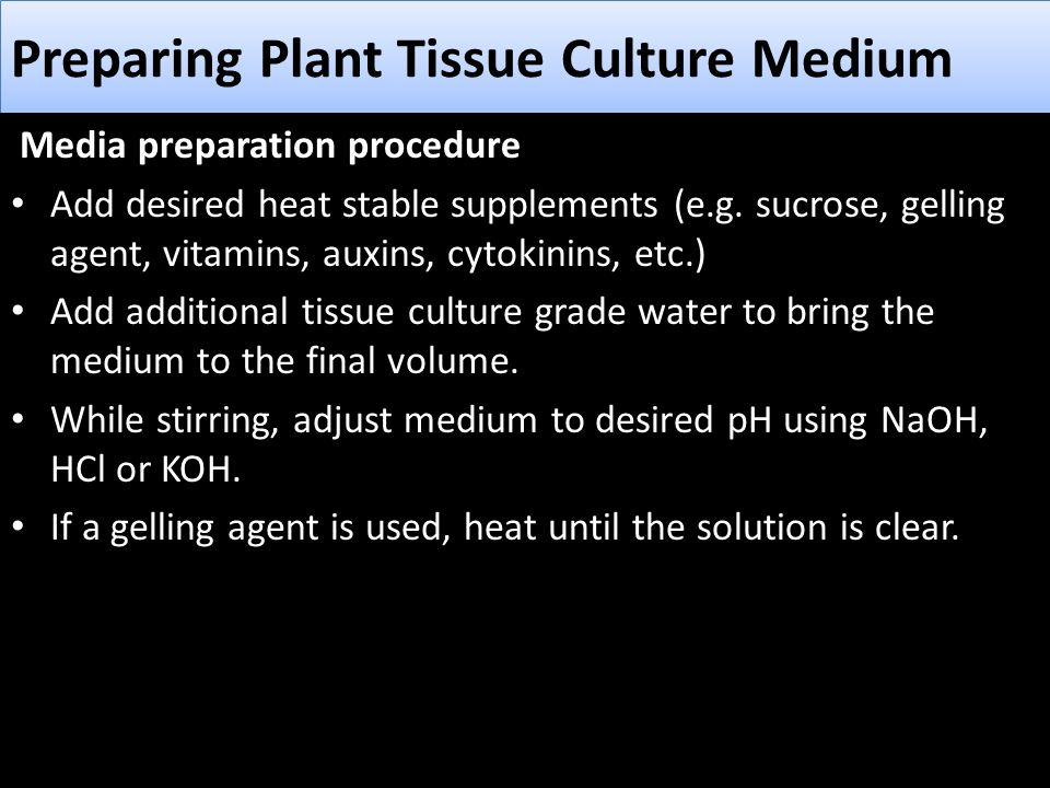 By Photo Congress    Vitamins Used In Plant Tissue Culture