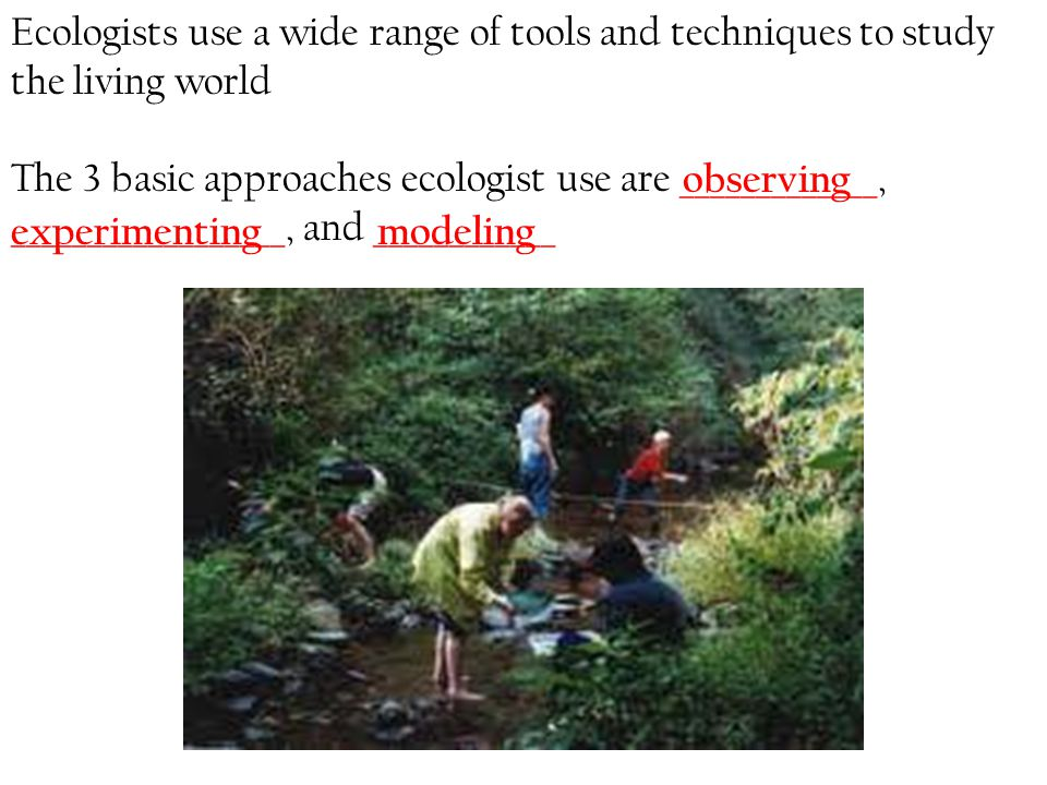 Ecologists use a wide range of tools and techniques to study the living world