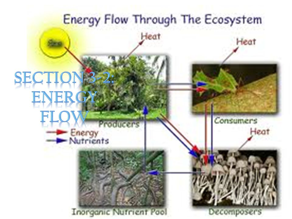Section 3-2: Energy Flow