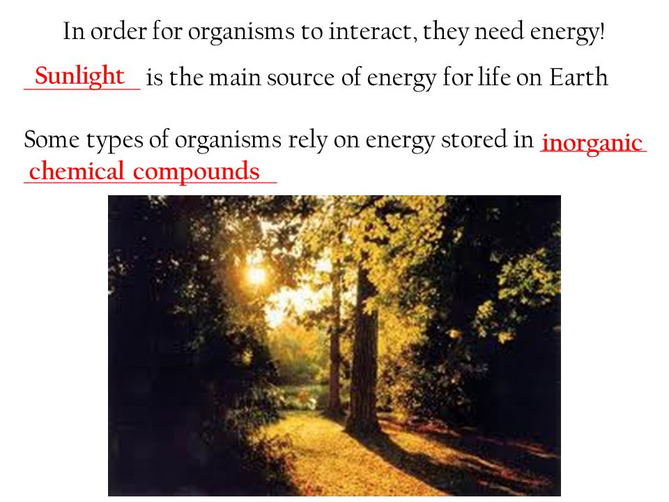 In order for organisms to interact, they need energy!