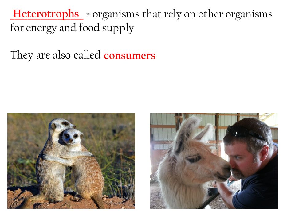 _________________ = organisms that rely on other organisms for energy and food supply