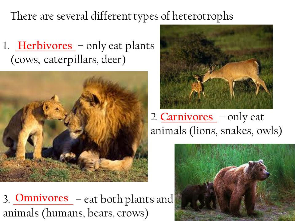 There are several different types of heterotrophs