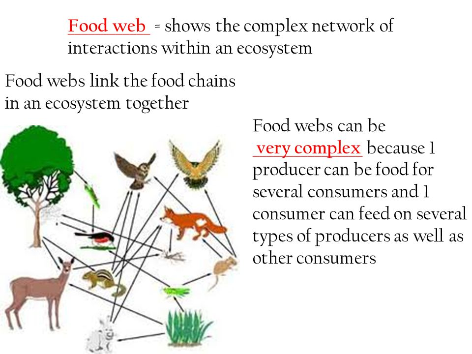 ____________ = shows the complex network of interactions within an ecosystem