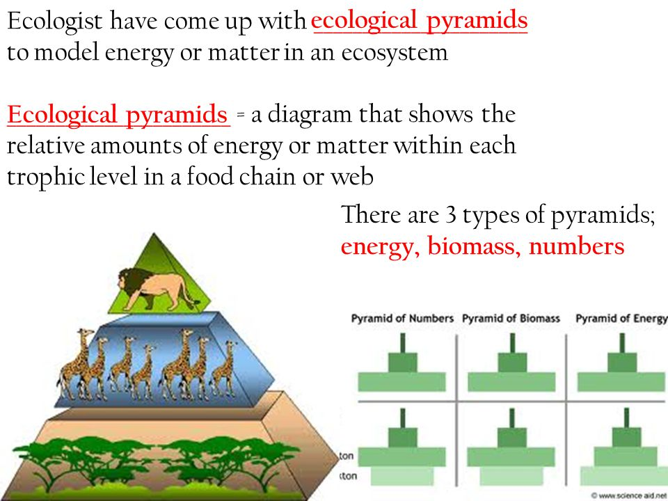 Ecologist have come up with ______________________ to model energy or matter in an ecosystem