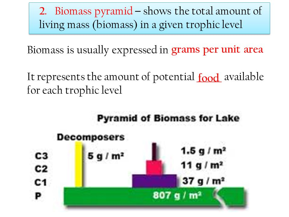 2. Biomass pyramid – shows the total amount of living mass (biomass) in a given trophic level