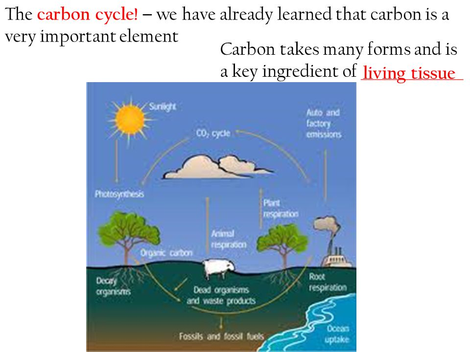 The carbon cycle! – we have already learned that carbon is a very important element