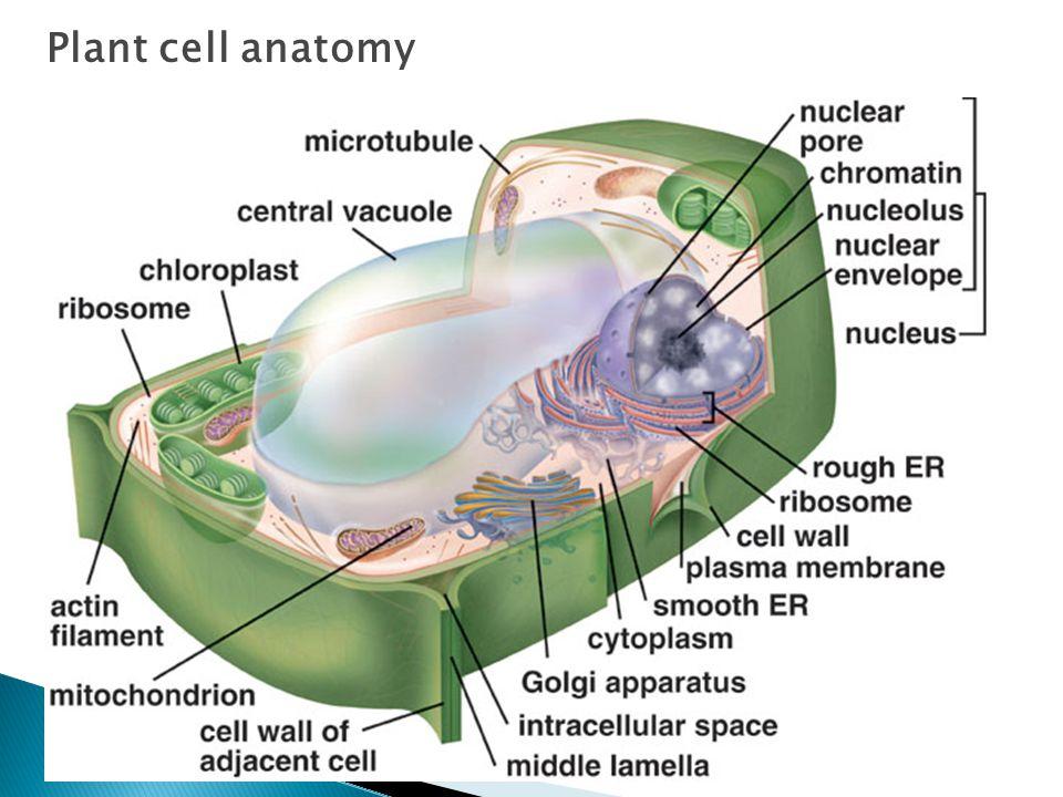 BIOREACTOR SYSTEM (ERT 314) - ppt video online download