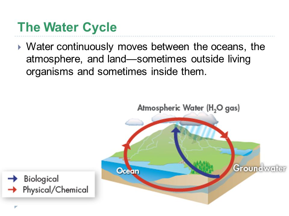 The Water Cycle Water continuously moves between the oceans, the atmosphere, and land—sometimes outside living organisms and sometimes inside them.
