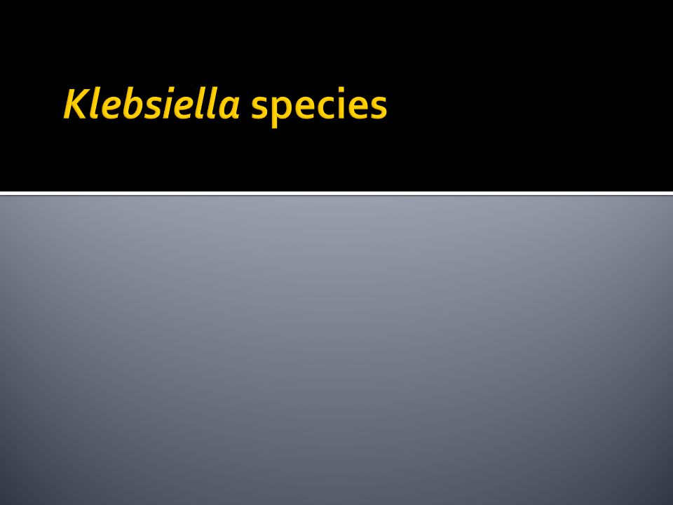 Klebsiella species