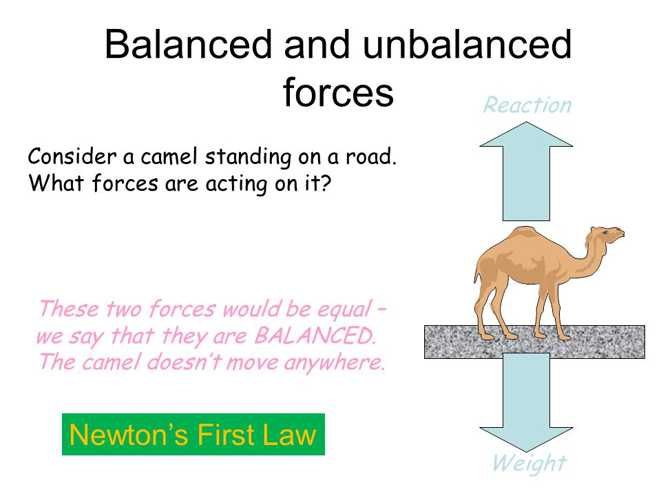 Unit 1: Forces Free body diagrams Newton's laws Weight and