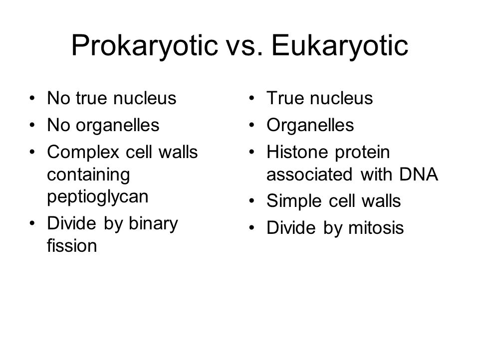 prokaryotes and eukaryotes differences pdf