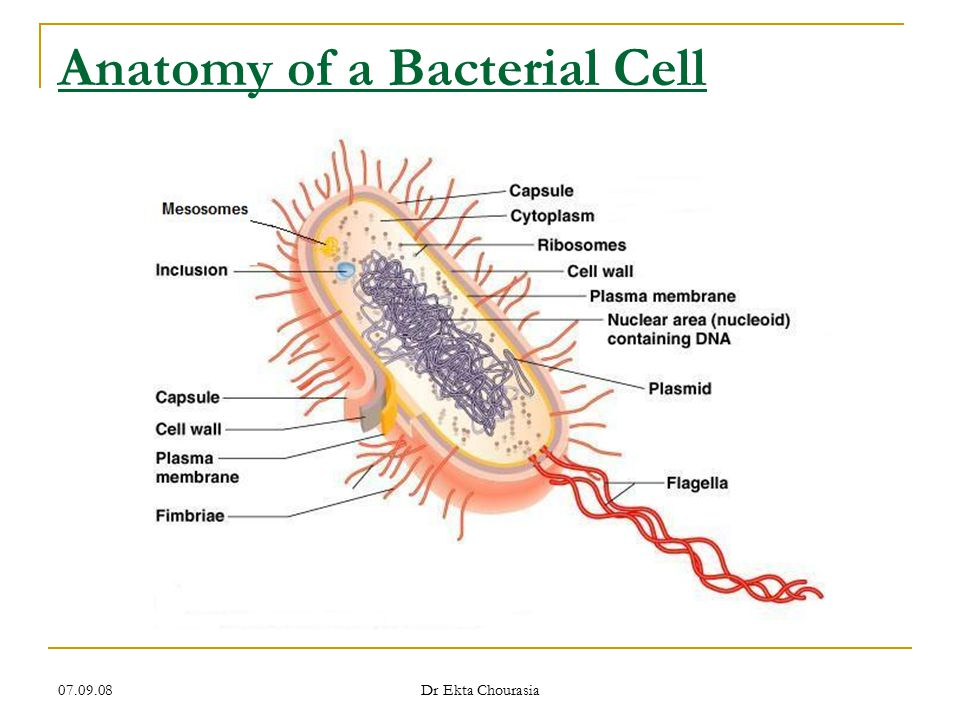 Bacteria – Morphology & Classification - ppt video online download