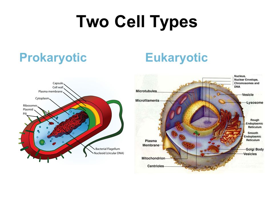 prokaryotes and eukaryotes Prokaryotes and eukaryotes differ in cell structure, chemistry, and evolution prokaryotes are among the simplest of life forms and may be the oldest true form of life on earth eukaryotes are thought to.