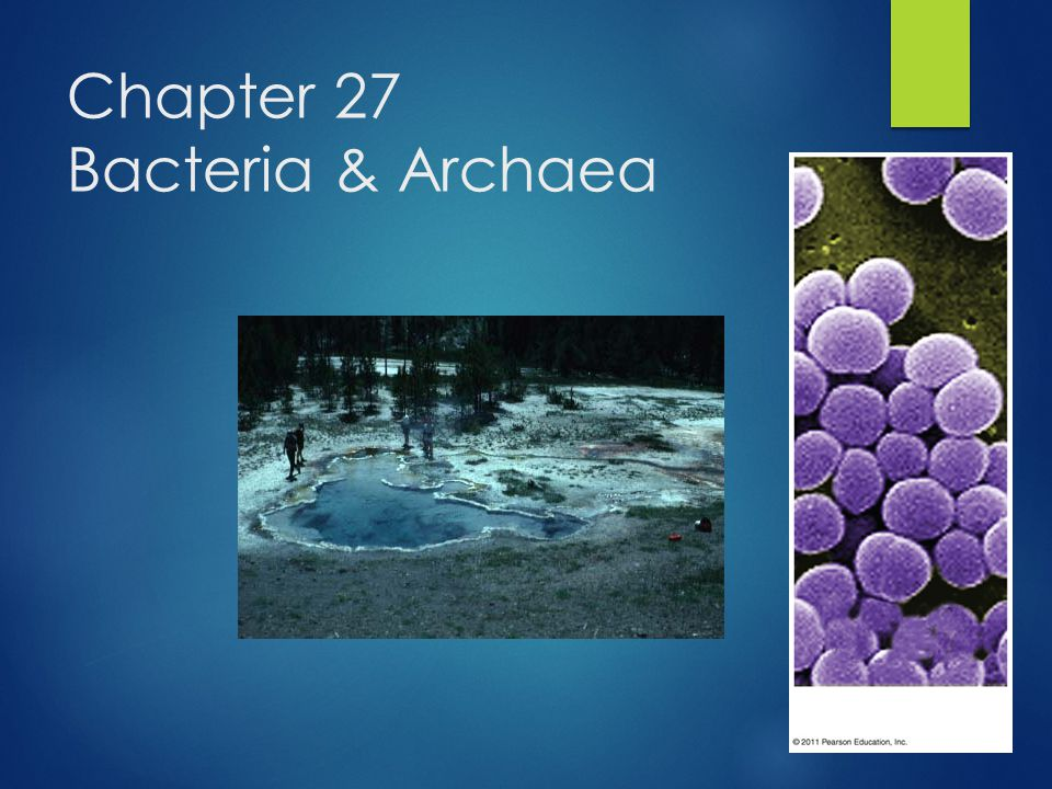 Chapter 27 Bacteria & Archaea
