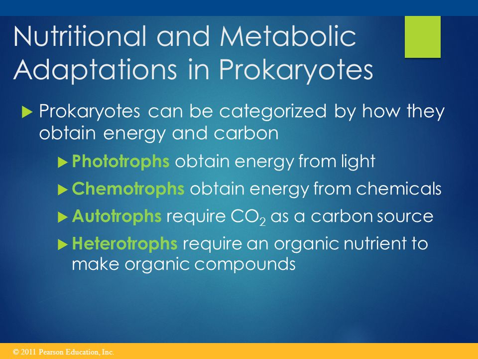 Nutritional and Metabolic Adaptations in Prokaryotes