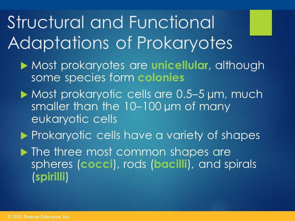 Structural and Functional Adaptations of Prokaryotes