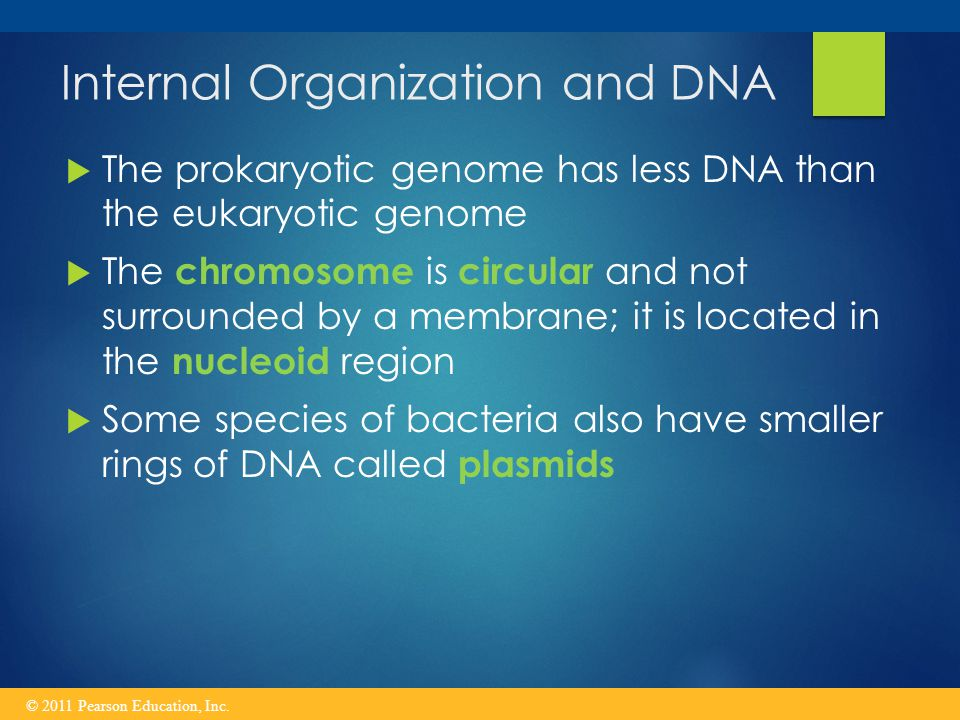 Internal Organization and DNA