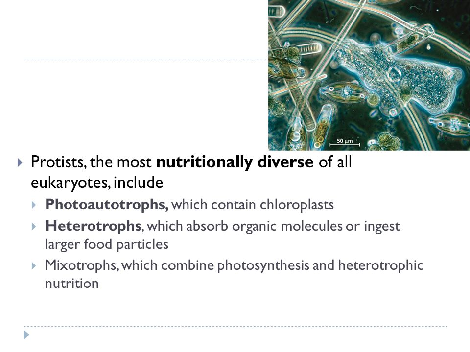 Protists, the most nutritionally diverse of all eukaryotes, include