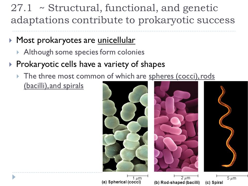 27.1 ~ Structural, functional, and genetic adaptations contribute to prokaryotic success