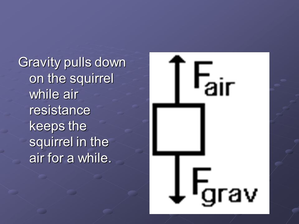 Gravity pulls down on the squirrel while air resistance keeps the squirrel in the air for a while.