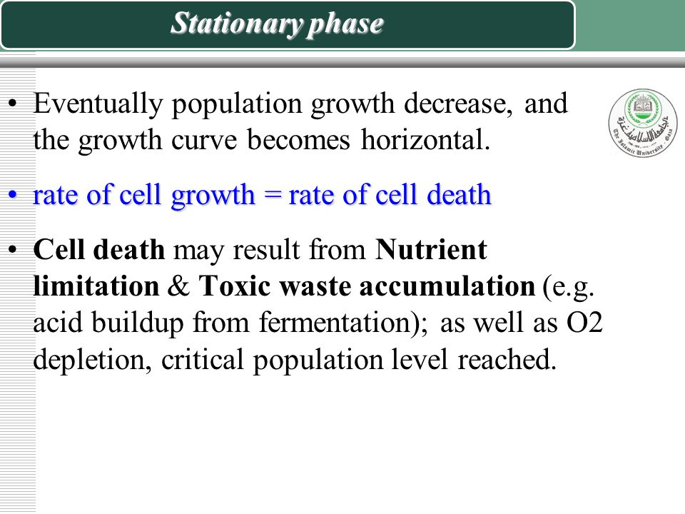 Stationary phase Eventually population growth decrease, and the growth curve becomes horizontal. rate of cell growth = rate of cell death.