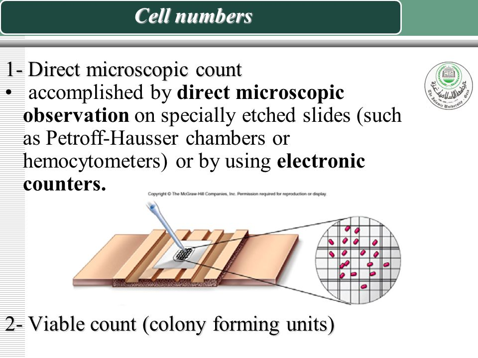 Cell numbers 1- Direct microscopic count.