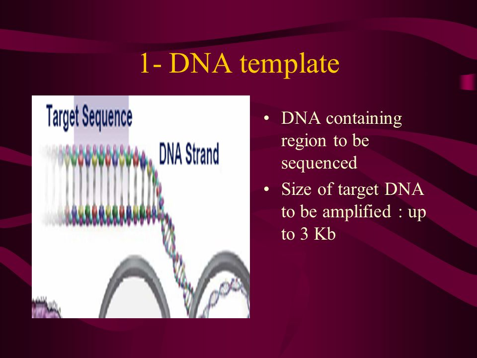 1- DNA template DNA containing region to be sequenced