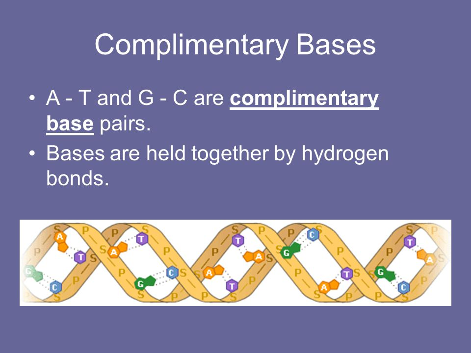 Complimentary Bases A - T and G - C are complimentary base pairs.