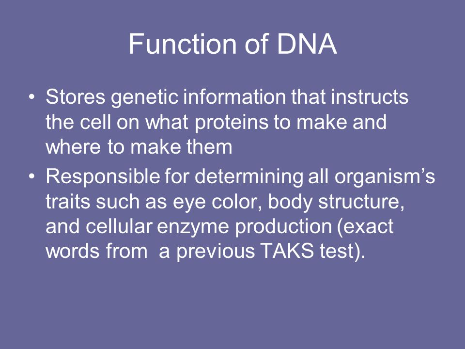 Function of DNA Stores genetic information that instructs the cell on what proteins to make and where to make them.