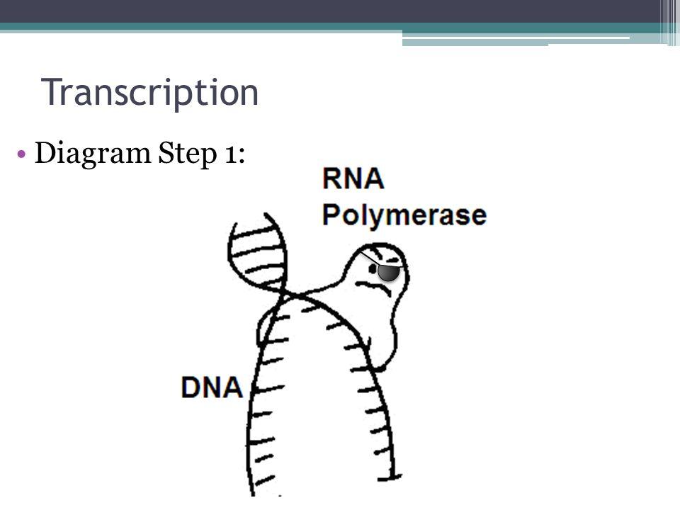 Dna Replication Transcription Translation Ppt Video Online Download