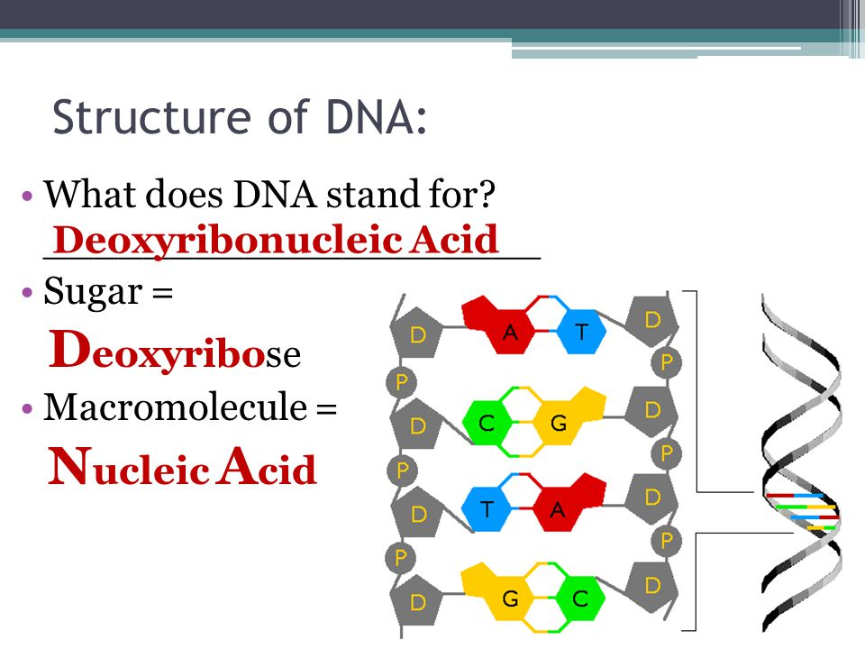 what do the letters dna stand for dna replication transcription translation ppt 25510