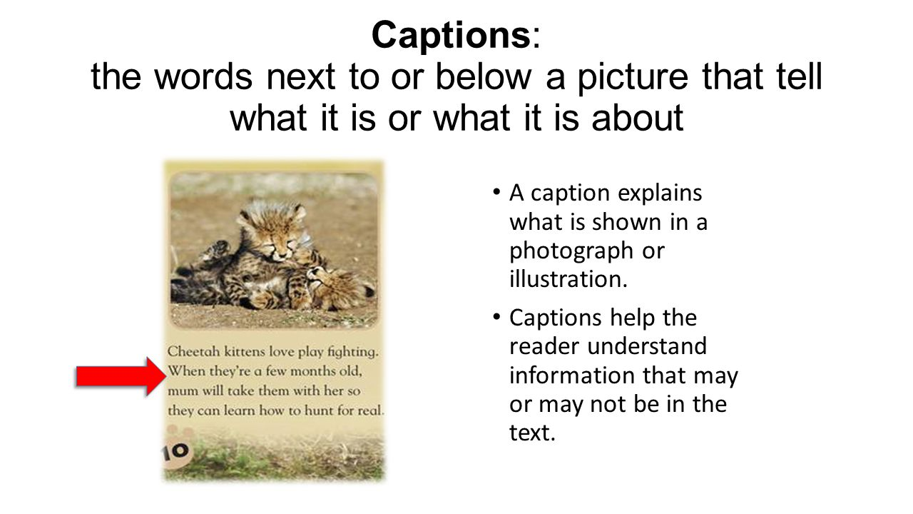Captions: the words next to or below a picture that tell what it is or what it is about