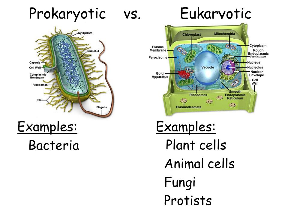 Evolution of prokaryotic and eukaryotic cells.