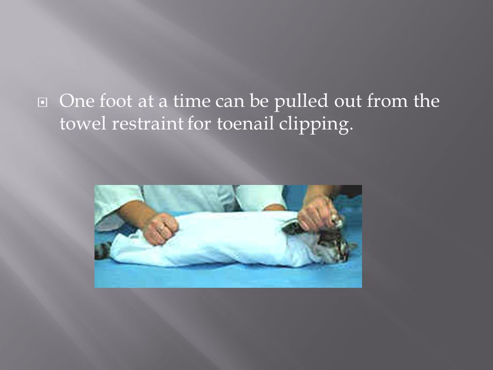 One foot at a time can be pulled out from the towel restraint for toenail clipping.