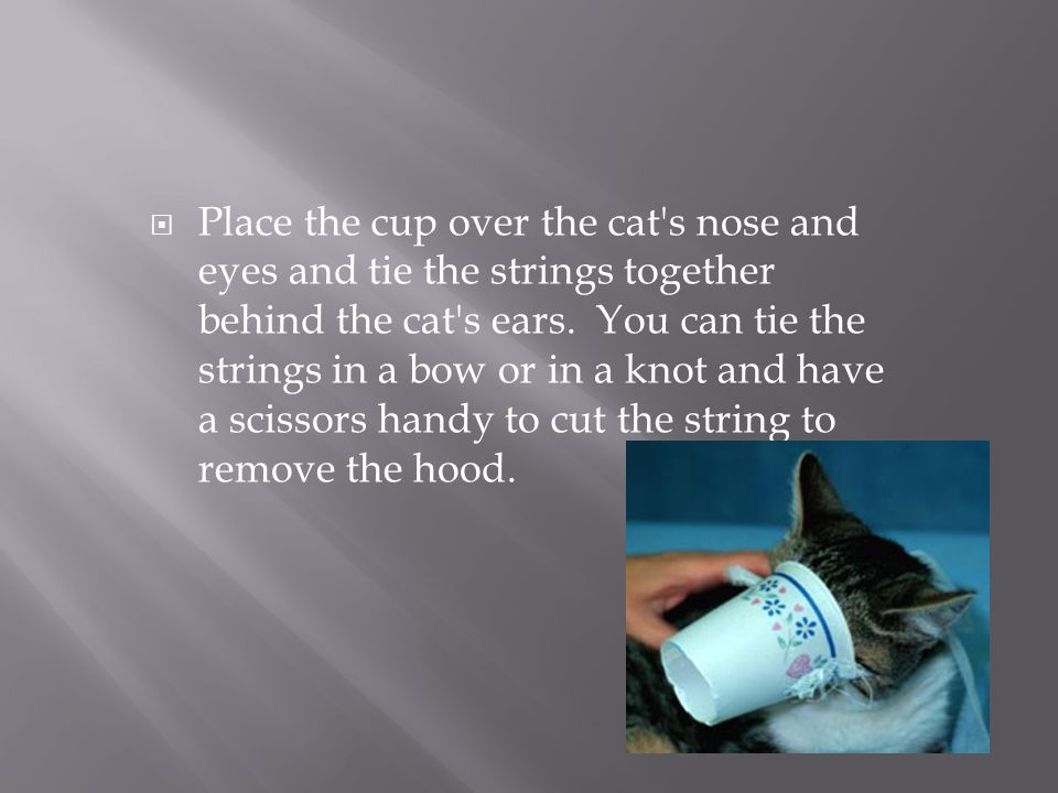 Place the cup over the cat s nose and eyes and tie the strings together behind the cat s ears. You can tie the strings in a bow or in a knot and have a scissors handy to cut the string to remove the hood.