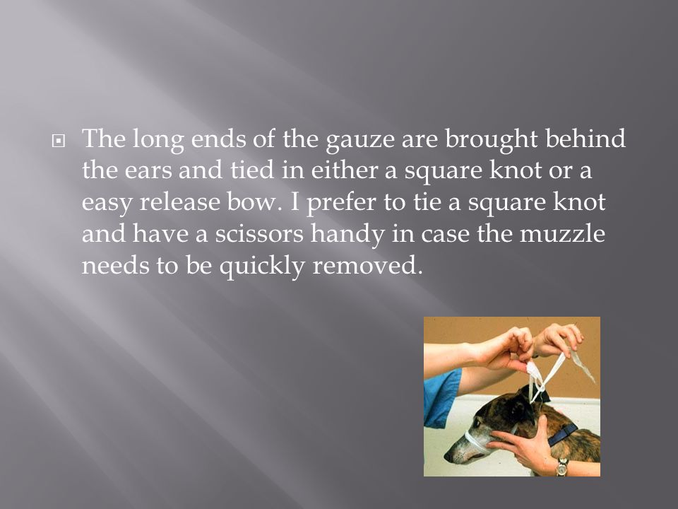 The long ends of the gauze are brought behind the ears and tied in either a square knot or a easy release bow.