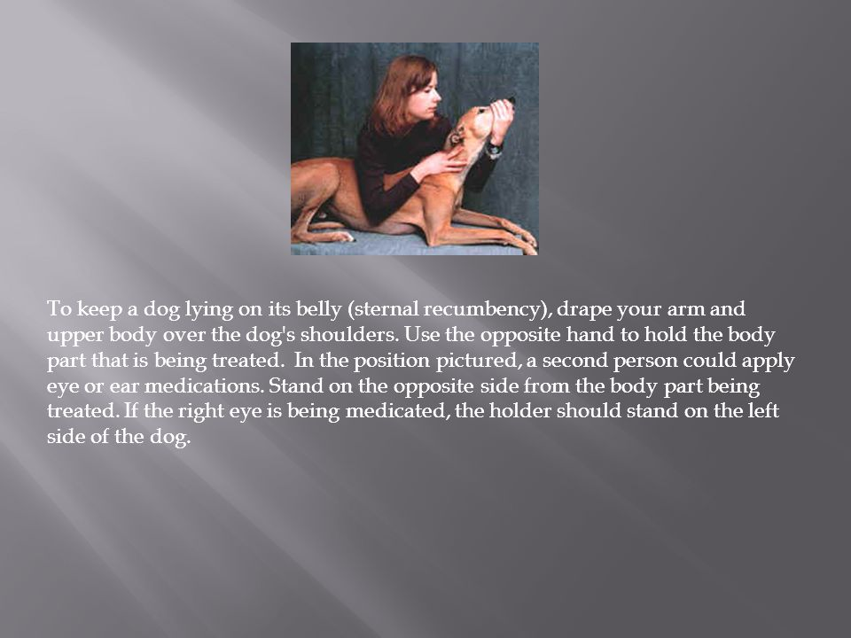 To keep a dog lying on its belly (sternal recumbency), drape your arm and upper body over the dog s shoulders. Use the opposite hand to hold the body part that is being treated. In the position pictured, a second person could apply eye or ear medications. Stand on the opposite side from the body part being treated. If the right eye is being medicated, the holder should stand on the left side of the dog.